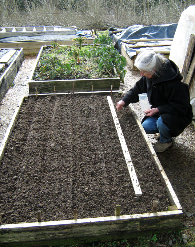Sowing flax seed